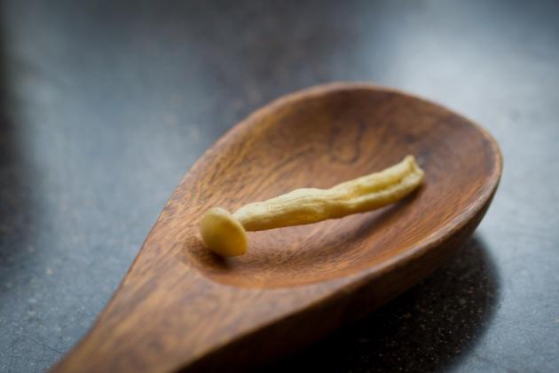 大白菇姬-芥末 4