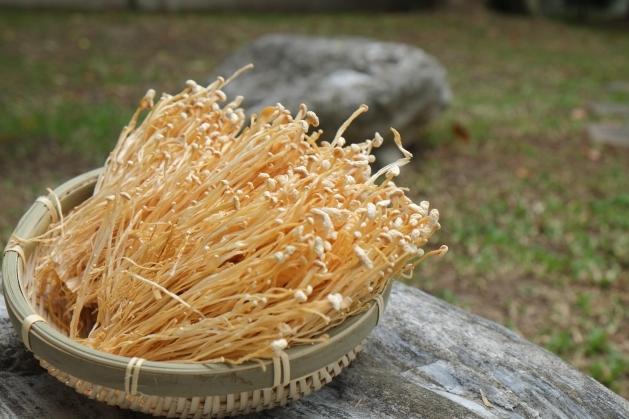 金針菇 1
